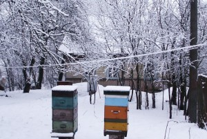 Мои пчелы зимуют на воле в саду