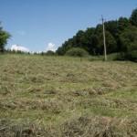 Будущий корм для коз -   ароматоное сено