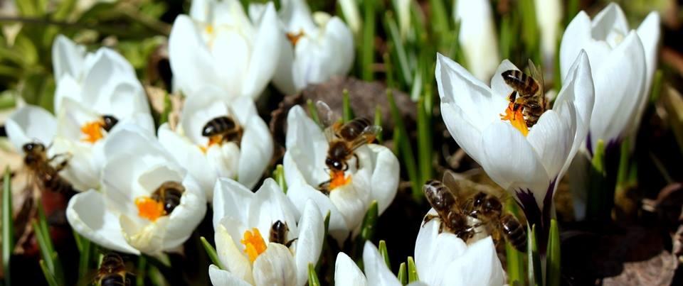 Пчеловодство для начинающих, пасека, мёд, прополис, перга